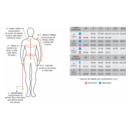 imagem do produto  Calça Segunda Pele Thermoskin Masculino - Curtlo